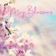 May Blossoms!